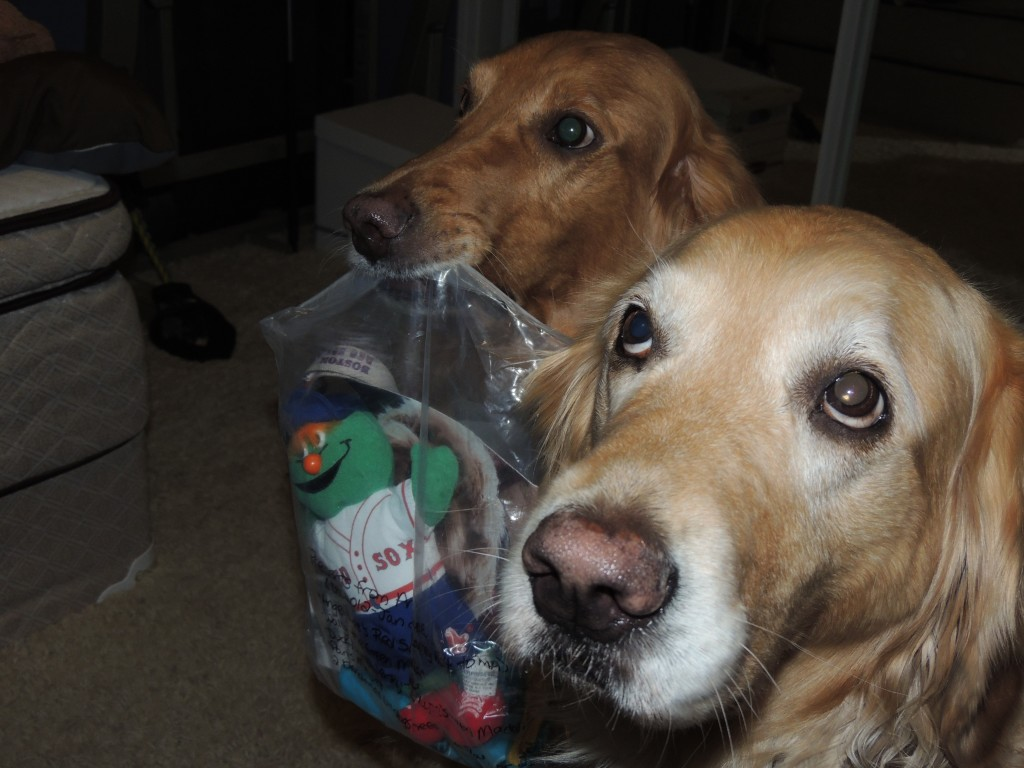 Koda mama sneaking a bag of Barney goodies from the box. Auntie Muncie looking all innocent..