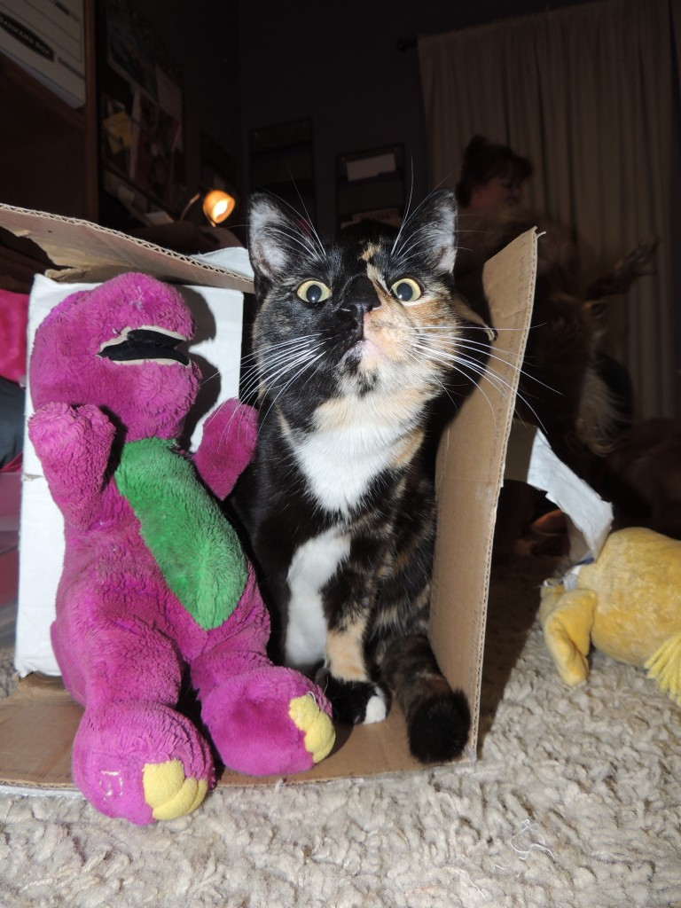 Even Sushi cat was interested...but in the end she like the box better than Barney